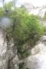 Canyon en Corse_7